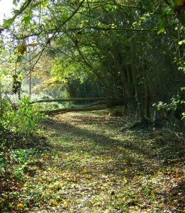 Photo of woodland walk in autumn